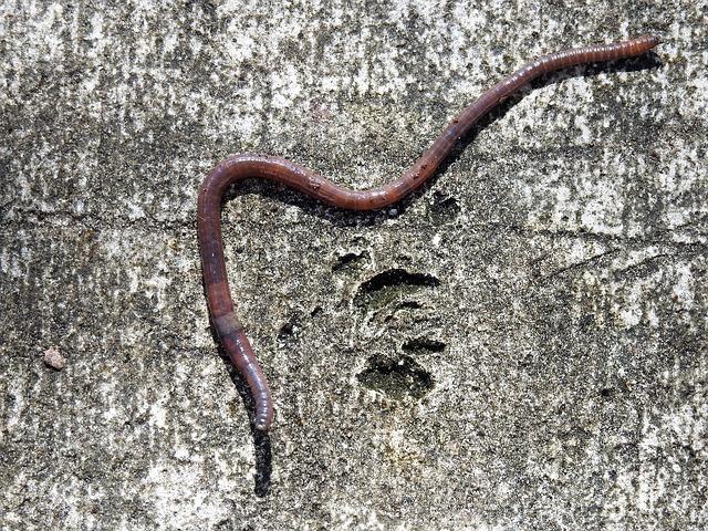 Stuck like a worm on hot pavement?